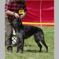 thumbnail Foxcliffe New York Times (Fernhill's Huntly D'Lux x Foxcliffe Hickory Wind) Hü, ChK, V4